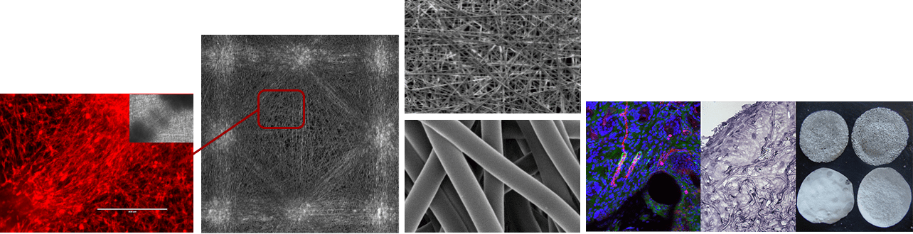 IBMM Polymers for Health and Biomaterials – Welcome to the